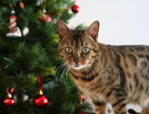 Haustiere im Advent und an Weihnachten